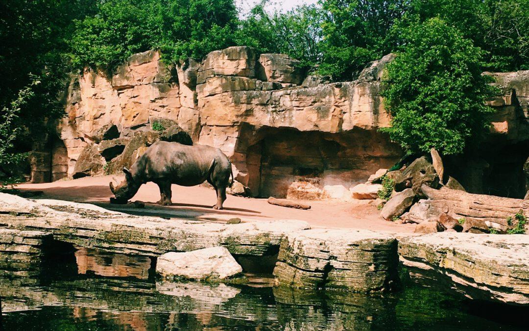 Een dagje uit naar de dierentuin, zo doe je dat!